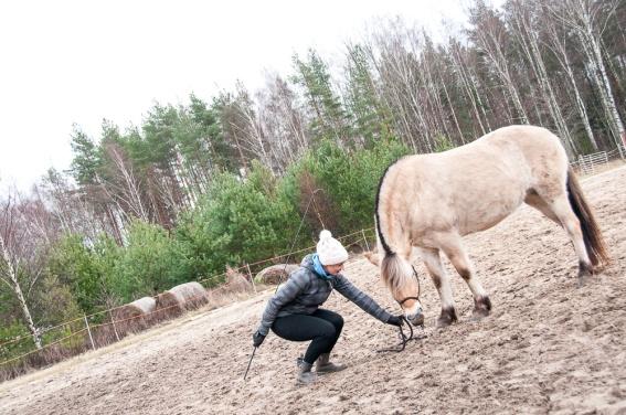SteamLur įranga skirta arklių valymui ir sausinimui.